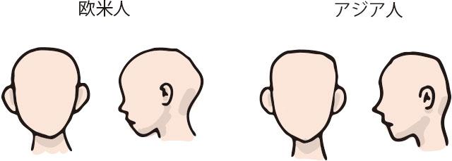 欧米人の頭の形と日本人(アジア人)の頭の形