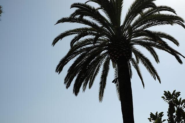 カリフォルニア州オレンジカウンティーのニューポートビーチ